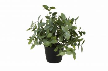 Melon Seed Grass Potted Plant 25cm